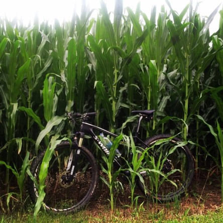 S-Works Child of the Corn