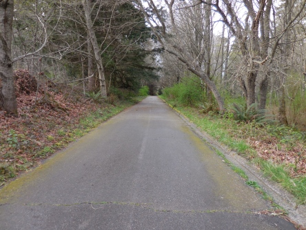 My random trees I found... and this turned into dirt single track, which yes, I rode on the road bike!