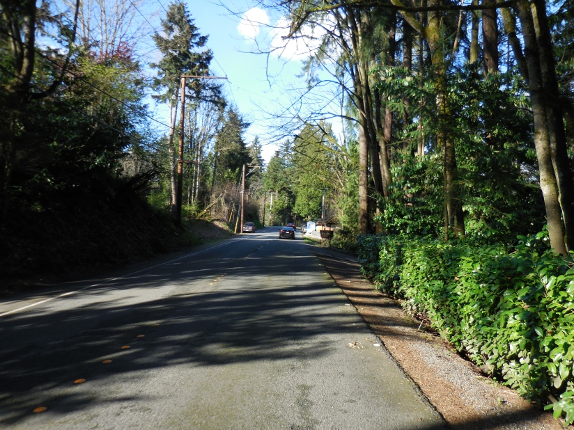 Tree lined Mercer Way on, you guessed it, Mercer Island